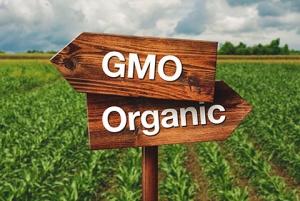 GMO or Organic Farming